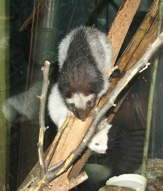 Only in the Philippines: List of Endangered Animals in the
