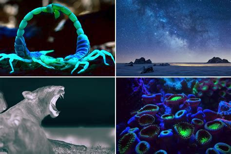 Netflix's new nature documentary Night On Earth offers