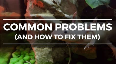 How to Set up an Axolotl Tank: Step-by-Step Setup and Care